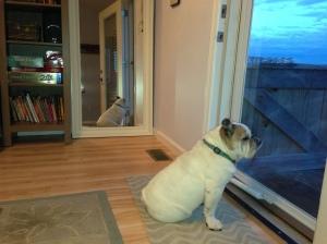 Wilbur in the window